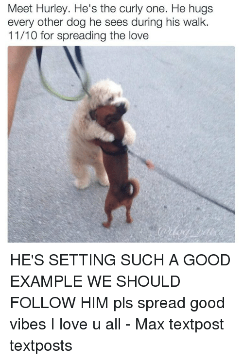 Love, Memes, and Good: Meet Hurley. He's the curly one. He hugs  every other dog he sees during his walk.  11/10 for spreading the love HE'S SETTING SUCH A GOOD EXAMPLE WE SHOULD FOLLOW HIM pls spread good vibes I love u all - Max textpost textposts