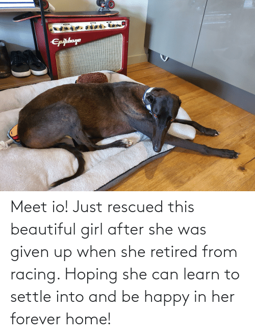 Was Given: Meet io! Just rescued this beautiful girl after she was given up when she retired from racing. Hoping she can learn to settle into and be happy in her forever home!