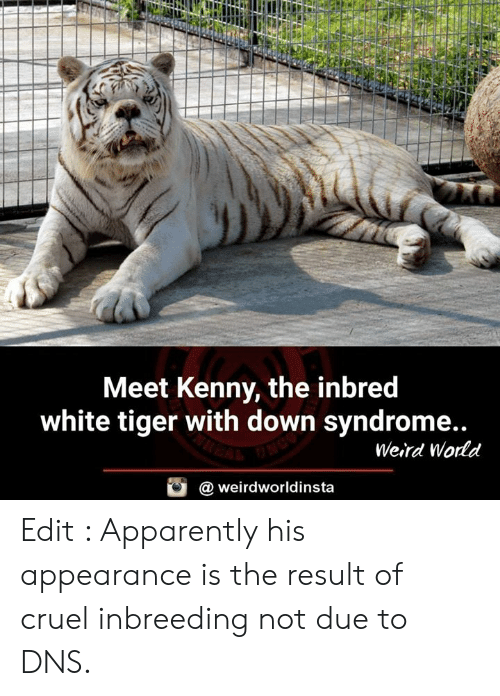 kenny: Meet Kenny, the inbred  white tiger with down syndrome..  Weird Wodd  @ weirdworldinsta Edit : Apparently his appearance is the result of cruel inbreeding not due to DNS.