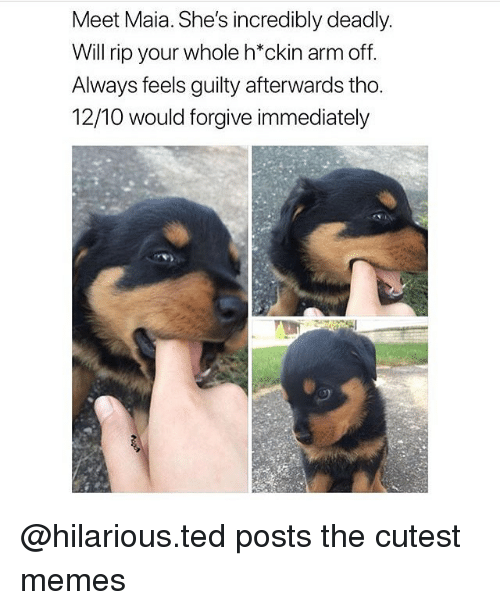 Memes, Ted, and Hilarious: Meet Maia. She's incredibly deadly.  Will rip your whole h*ckin arm off.  Always feels guilty afterwards tho.  12/10 would forgive immediately @hilarious.ted posts the cutest memes