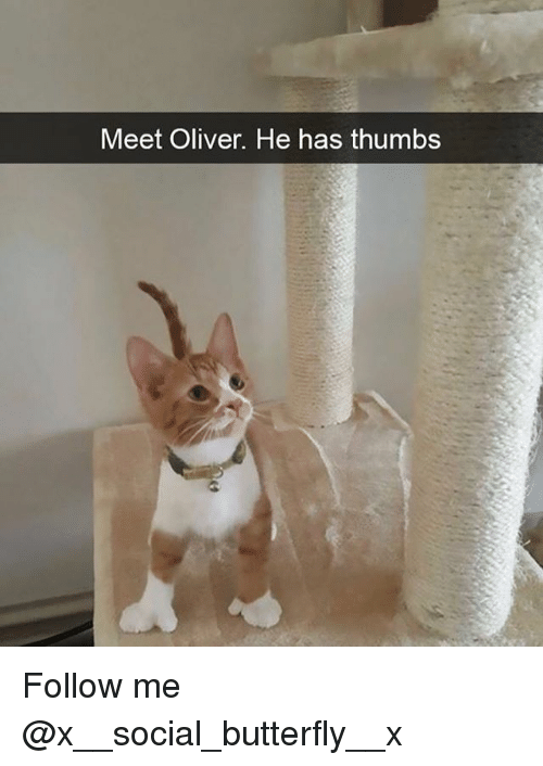 Memes, Butterfly, and 🤖: Meet Oliver. He has thumbs Follow me @x__social_butterfly__x