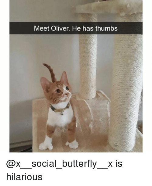 Funny, Butterfly, and Hilarious: Meet Oliver. He has thumbs @x__social_butterfly__x is hilarious