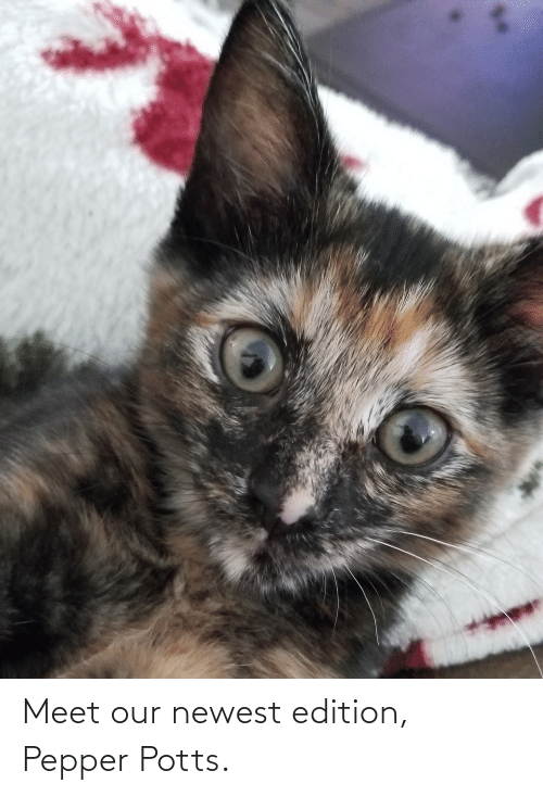 pepper potts: Meet our newest edition, Pepper Potts.