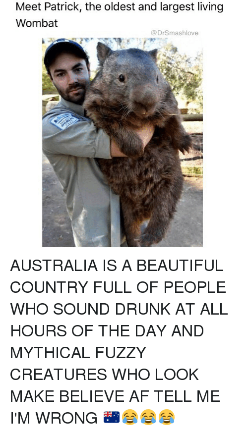 wombat: Meet Patrick, the oldest and largest living  Wombat  @DrSmashlove AUSTRALIA IS A BEAUTIFUL COUNTRY FULL OF PEOPLE WHO SOUND DRUNK AT ALL HOURS OF THE DAY AND MYTHICAL FUZZY CREATURES WHO LOOK MAKE BELIEVE AF TELL ME I'M WRONG 🇦🇺😂😂😂