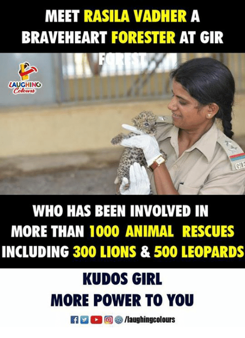 Animal, Girl, and Lions: MEET RASILA VADHER A  BRAVEHEART FORESTER AT GIR  LAUGHING  WHO HAS BEEN INVOLVED IN  MORE THAN 1000 ANIMAL RESCUES  INCLUDING 300 LIONS & 500 LEOPARDS  KUDOS GIRL  MORE POWER TO YOU  R 0 @] ㊧ /laughingcolours