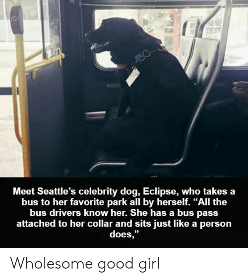 """Eclipse: Meet Seattle's celebrity dog, Eclipse, who takes a  bus to her favorite park all by herself. """"All the  bus drivers know her. She has a bus pass  attached to her collar and sits just like a person  does,"""" Wholesome good girl"""