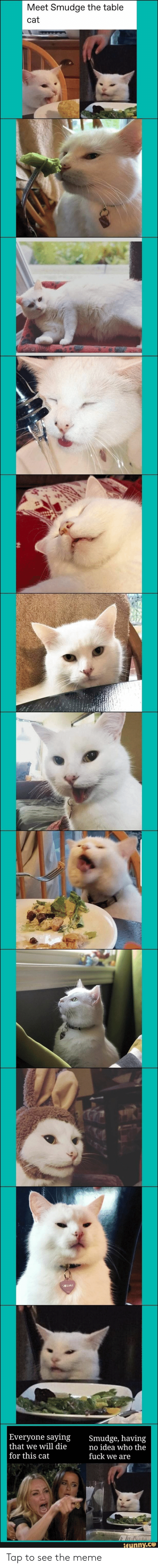 Meme, Idea, and Cat: Meet Smudge the table  cat  |Everyone saying  that we will die  for this cat  Smudge, having  no idea who the  fuck we are  taLA  ifunny.co Tap to see the meme
