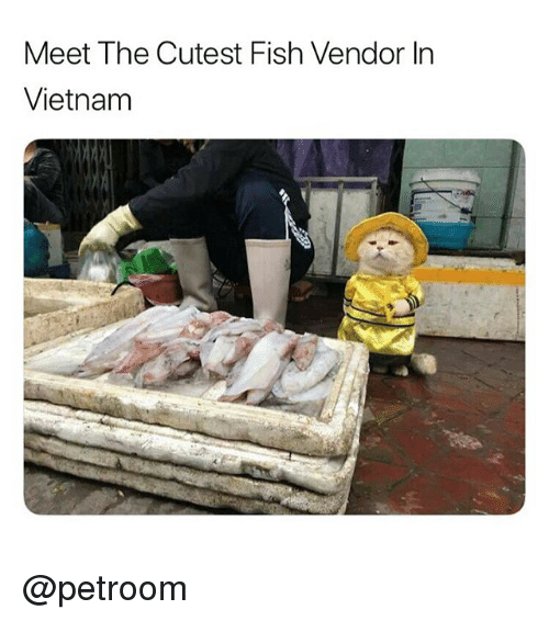 Funny, Fish, and Vietnam: Meet The Cutest Fish Vendor In  Vietnam @petroom