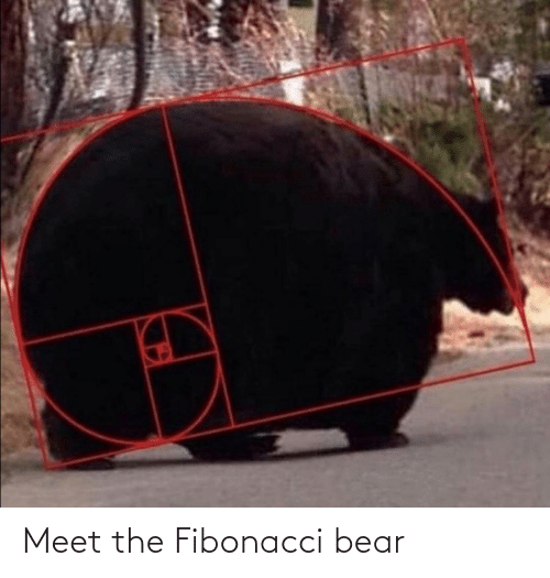 Meet: Meet the Fibonacci bear