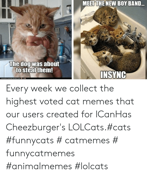 LOLcats: MEET THE NEW BOY BAND..  The dogwas about  to steal them  INSYNG Every week we collect the highest voted cat memes that our users created for ICanHas Cheezburger's LOLCats.#cats #funnycats # catmemes # funnycatmemes #animalmemes #lolcats