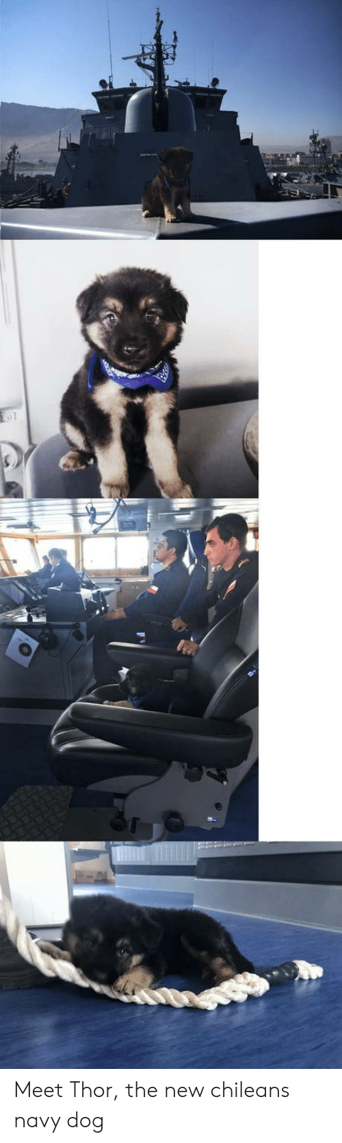 Chilean: Meet Thor, the new chileans navy dog