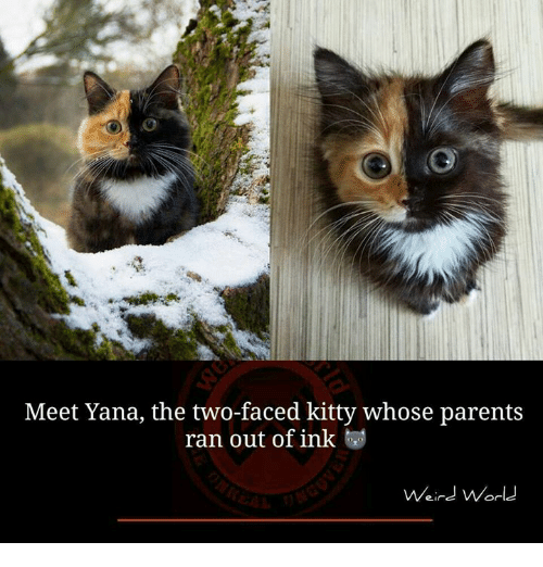 Two-Face: Meet Yana, the two-faced kitty whose parents  ran out of ink  Weird World