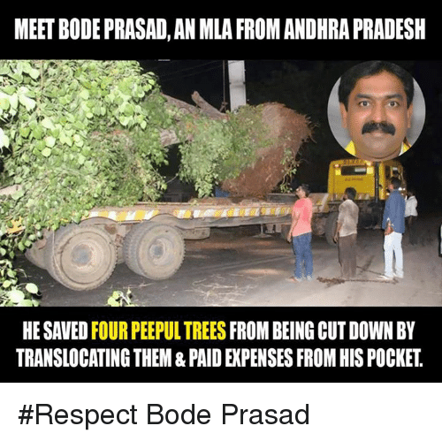 Bodees: MEETBODEPRASAD, AN MLA FROMANDHRAPRADESH  HESAVED FOUR PEEPULTREES  FROM BEING CUT DOWN BY  TRANSLOCATINGTHEM & PAID EXPENSES FROM HIS POCKET #Respect Bode Prasad