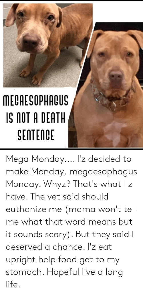 That Word: Mega Monday.... I'z decided to make Monday, megaesophagus Monday. Whyz? That's what I'z have. The vet said should euthanize me (mama won't tell me what that word means but it sounds scary). But they said I deserved a chance. I'z eat upright help food get to my stomach. Hopeful live a long life.
