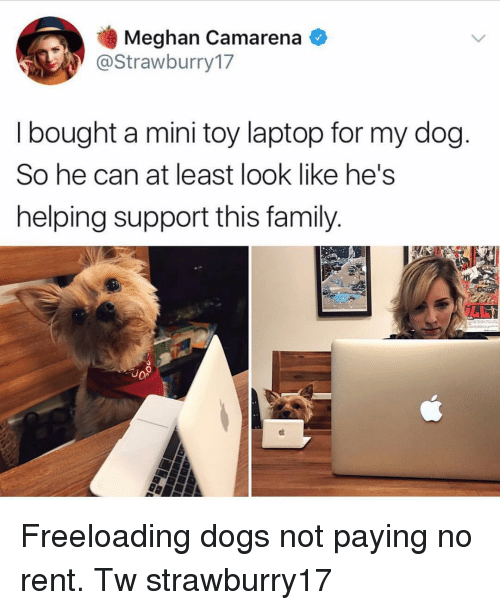 Meghan: Meghan Camarena  @Strawburry17  I bought a mini toy laptop for my dog  So he can at least look like he's  helping support this family.  18  о» Freeloading dogs not paying no rent. Tw strawburry17