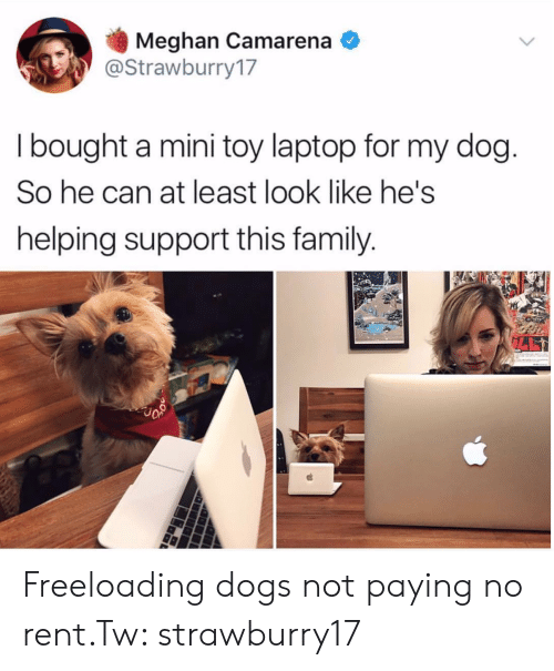 Meghan: Meghan Camarena  @Strawburry17  I bought a mini toy laptop for my dog  So he can at least look like he's  helping support this family Freeloading dogs not paying no rent.Tw: strawburry17