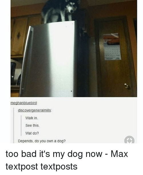 Bad, Memes, and Wat: meghanbluebird:  discoveraeneralmills  Walk in.  See this  Wat do?  Depends, do you own a dog? too bad it's my dog now - Max textpost textposts