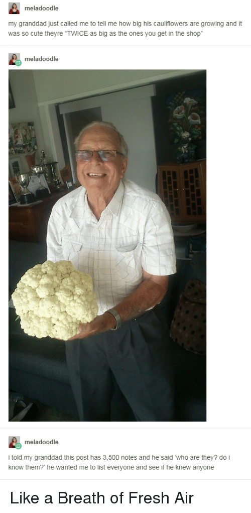 """Breath Of Fresh Air: meladoodle  my granddad just called me to tell me how big his cauliflowers are growing and it  was so cute theyre """"TWICE as big as the ones you get in the shop  meladoodle  meladoodle  i told my granddad this post has 3,500 notes and he said who are they? do i  know them? he wanted me to list everyone and see if he knew anyone <p>Like a Breath of Fresh Air</p>"""