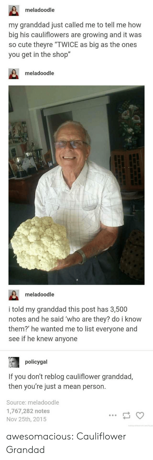 """grandad: meladoodle  my granddad just called me to tell me how  big his cauliflowers are growing and it was  so cute theyre """"TWICE as big as the ones  you get in the shop""""  meladoodle  meladoodle  i told my granddad this post has 3,500  notes and he said 'who are they? do i know  them?' he wanted me to list everyone and  see if he knew anyone  policygal  If you don't reblog cauliflower granddad,  then you're just a mean person.  Source: meladoodle  1,767,282 notes  Nov 25th, 2015 awesomacious:  Cauliflower Grandad"""
