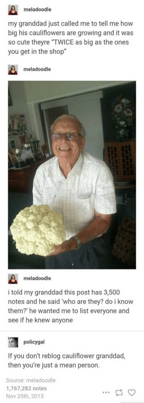 """cauliflower: meladoodle  my granddad just called me to tell me how  big his cauliflowers are growing and it was  so cute theyre """"TWICE as big as the ones  you get in the shop""""  meladoodle  meladoodle  i told my granddad this post has 3,500  notes and he said who are they? do i know  them? he wanted me to list everyone and  see if he knew anyone  policygal  If you don't reblog cauliflower granddad,  then you're just a mean person.  Source: meladoodle  1,767,282 notes  Nov 25th, 2015"""