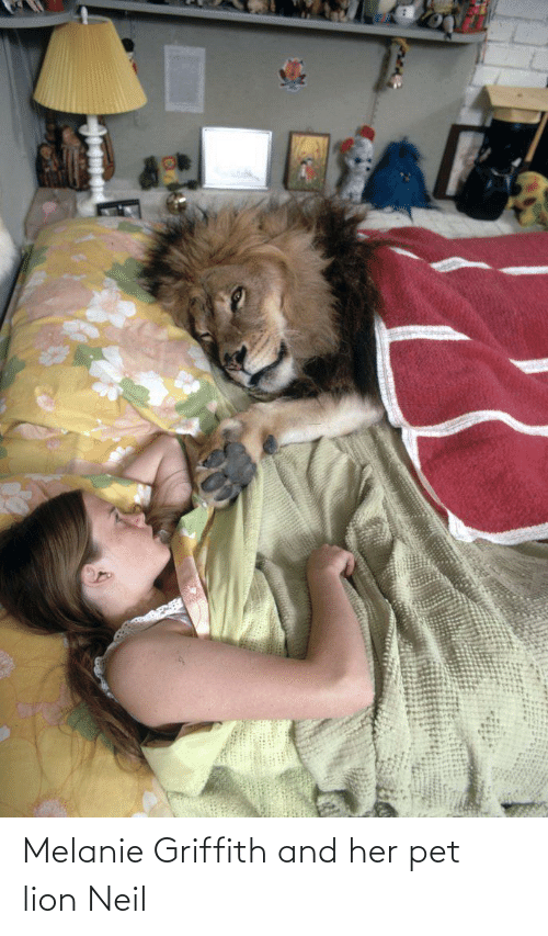 Neil: Melanie Griffith and her pet lion Neil
