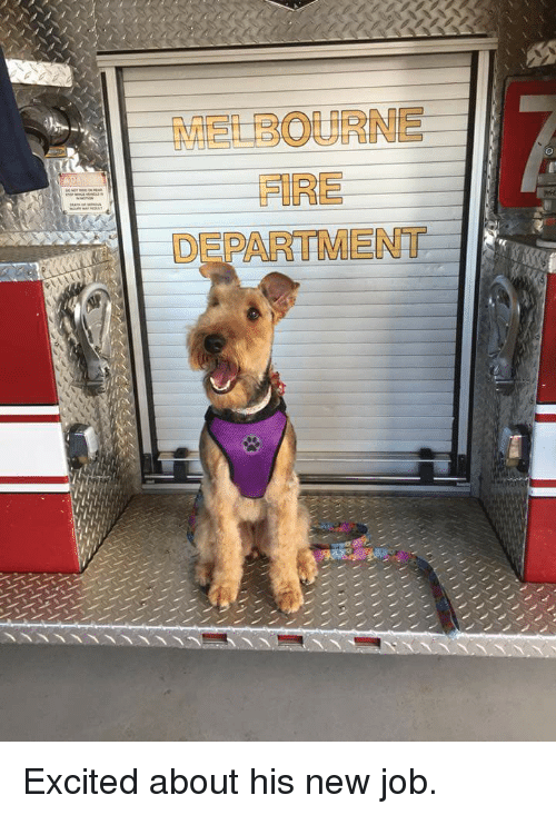 Fire, Job, and Local: MELBOURNE  FIRE  DEPARTMENT Excited about his new job.