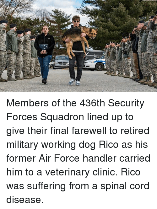 Memes, Air Force, and Military: Members of the 436th Security Forces Squadron lined up to give their final farewell to retired military working dog Rico as his former Air Force handler carried him to a veterinary clinic. Rico was suffering from a spinal cord disease.