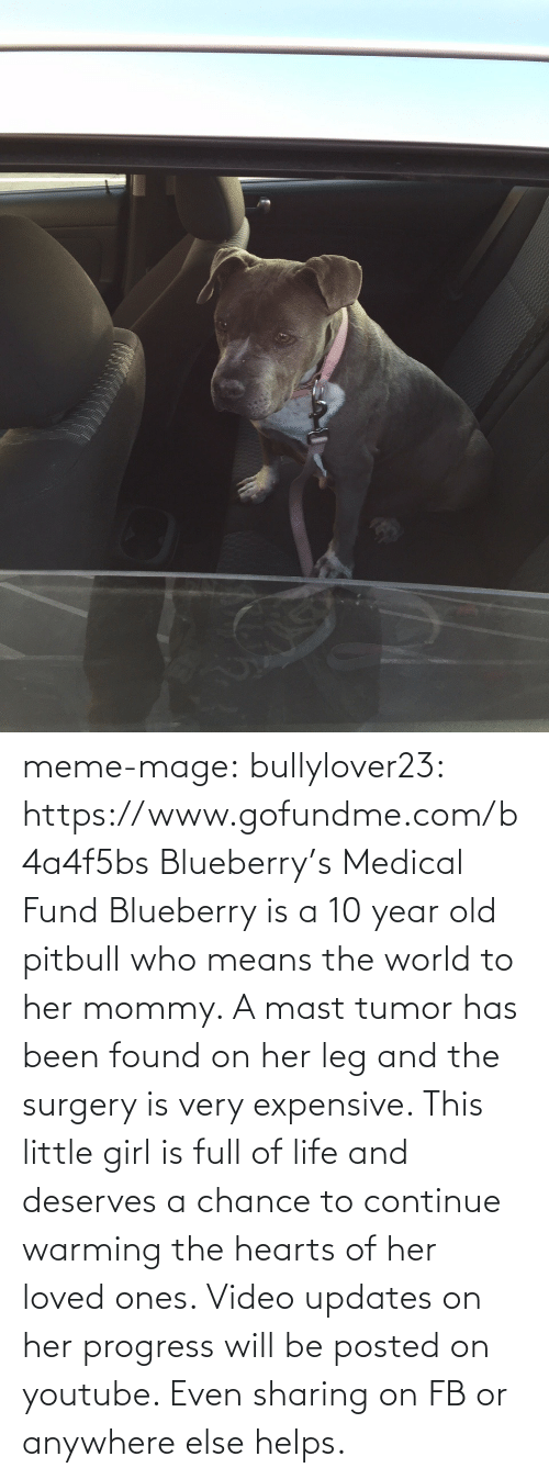 Very Expensive: meme-mage:  bullylover23:  https://www.gofundme.com/b4a4f5bs        Blueberry's Medical Fund       Blueberry is a 10 year old pitbull who means the world to her mommy. A mast tumor has been found on her leg and the surgery is very expensive. This little girl is full of life and deserves a chance to continue warming the hearts of her loved ones. Video updates on her progress will be posted on youtube. Even sharing on FB or anywhere else helps.