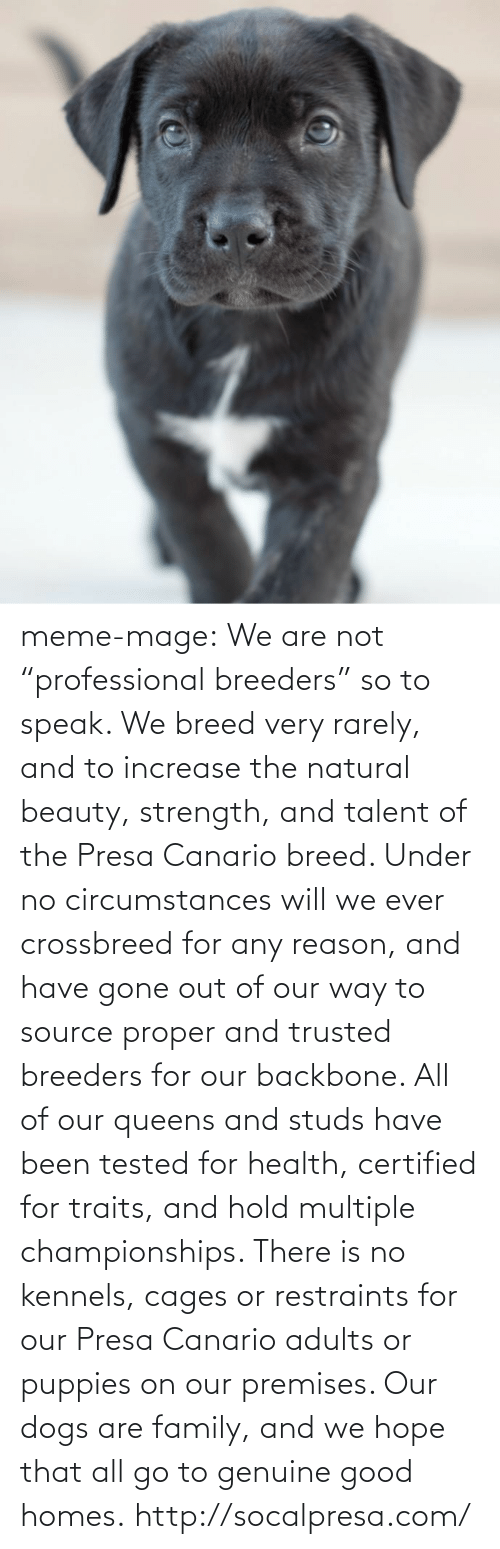 """Cages: meme-mage:    We are not """"professional breeders"""" so to speak. We breed very rarely, and to increase the natural beauty, strength, and talent of the Presa Canario breed. Under no circumstances will we ever crossbreed for any reason, and have gone out of our way to source proper and trusted breeders for our backbone. All of our queens and studs have been tested for health, certified for traits, and hold multiple championships. There is no kennels, cages or restraints for our Presa Canario adults or puppies on our premises. Our dogs are family, and we hope that all go to genuine good homes.   http://socalpresa.com/"""