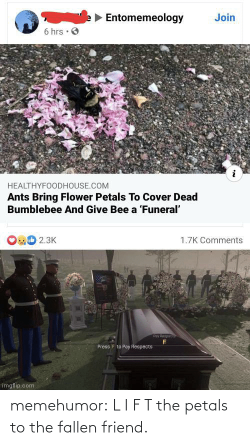 l&i: memehumor:  L I F T the petals to the fallen friend.