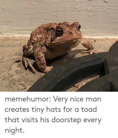 Nice Man: memehumor:  Very nice man creates tiny hats for a toad that visits his doorstep every night.