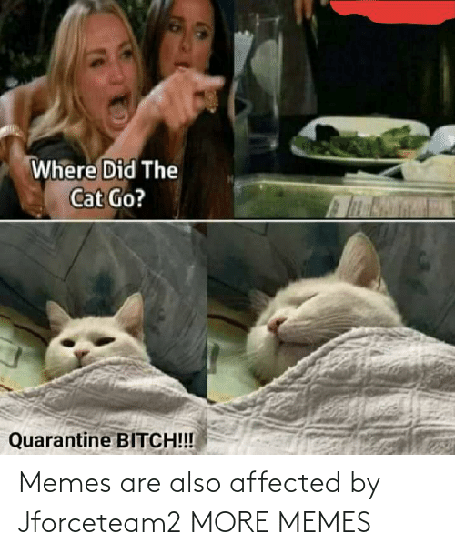 Memes Are: Memes are also affected by Jforceteam2 MORE MEMES