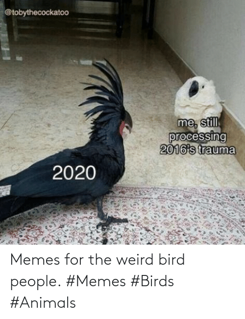 People Memes: Memes for the weird bird people. #Memes #Birds #Animals