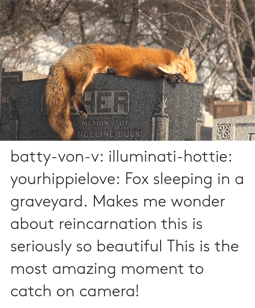 hottie: MEMORYOF  NGELINE BUCK batty-von-v: illuminati-hottie:  yourhippielove:   Fox sleeping in a graveyard.  Makes me wonder about reincarnation  this is seriously so beautiful   This is the most amazing moment to catch on camera!