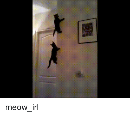 Irl, Cat IRL, and Back: meow_irl