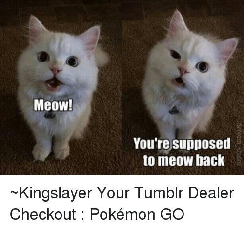 Dank, Back, and Pokemon GO: Meow!  You're supposed  to meow back ~Kingslayer Your Tumblr Dealer  Checkout : Pokémon GO