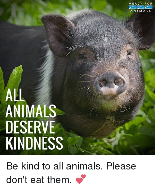 Animals, Memes, and Kindness: MERCY FOR  ANIMALS  ALL  ANIMALS  DESERVE  KINDNESS Be kind to all animals. Please don't eat them. 💕