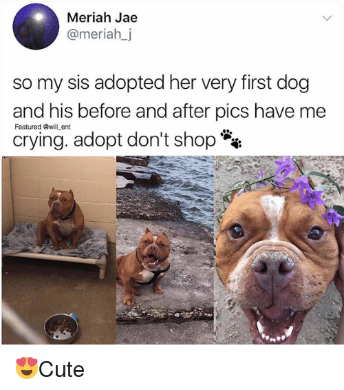 Crying, Memes, and 🤖: Meriah Jae  @meriah_j  so my sis adopted her very first dog  and his before and after pics have me  crying. adopt don't shop **  Featured @will ent 😍Cute