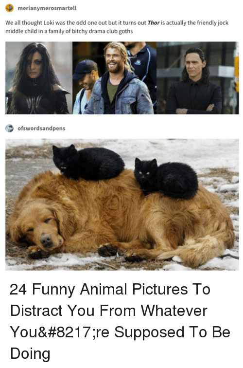 Bitchy: merianymerosmartell  We all thought Loki was the odd one out but it turns out Thor is actually the friendly jock  middle child in a family of bitchy drama club goths  ofswordsandpens 24 Funny Animal Pictures To Distract You From Whatever You're Supposed To Be Doing