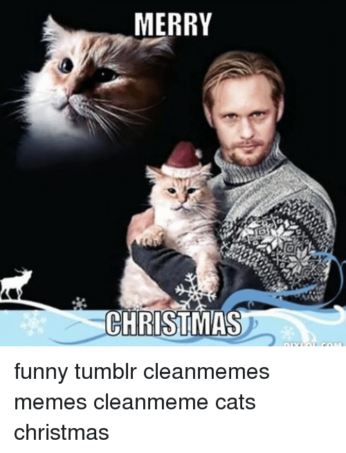 Funny Christmas Memes Tumblr : Best memes about cat christmas
