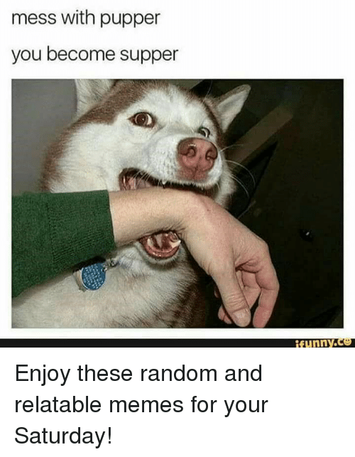 Funny, Memes, and Relatable: mess with pupper  you become supper  funny.Ce Enjoy these random and relatable memes for your Saturday!