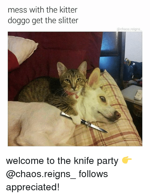 mess: mess with the kitter  doggo get the slitter  chaos reigns welcome to the knife party 👉@chaos.reigns_ follows appreciated!