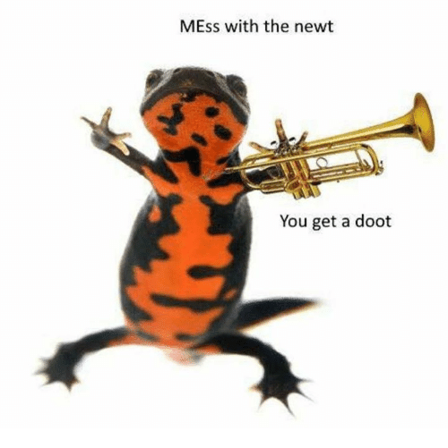 mess: MEss with the newt  You get a doot