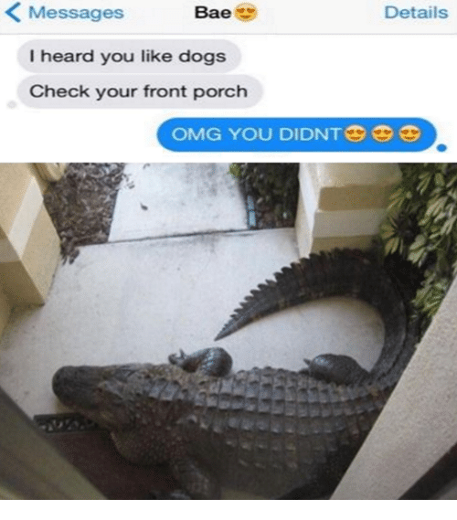 Bae, Dogs, and Omg: Messages  Bae  Details  I heard you like dogs  Check your front porch  OMG YOU DIDNTGS 3