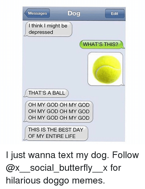 Doggo Memes: Messages  Dog  Edit  l think I might be  depressed  WHAT'S THIS?  THAT'S A BALL  OH MY GOD OH MY GOD  OH MY GOD OH MY GOD  OH MY GOD OH MY GOD  THIS IS THE BEST DAY  OF MY ENTIRE LIFE I just wanna text my dog. Follow @x__social_butterfly__x for hilarious doggo memes.