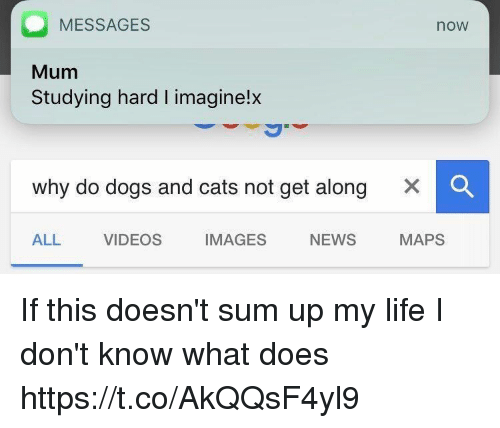 Cats, Dogs, and Life: MESSAGES  Mum  Studying hard I imaginelx  now  why do dogs and cats not get along  ×  ALL VIDEOS IMAGES NEWS  MAPS If this doesn't sum up my life I don't know what does https://t.co/AkQQsF4yl9