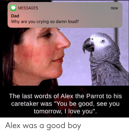 """yoiu: MESSAGES  now  Dad  Why are you crying so damn loud?  The last words of Alex the Parrot to his  caretaker was """"You be good, see yoiu  tomorrow, I love you"""". Alex was a good boy"""