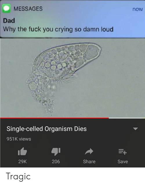 organism: MESSAGES  now  Dad  Why the fuck you crying so damn loud  Single-celled Organism Dies  951K views  29K  206  Share  Save Tragic