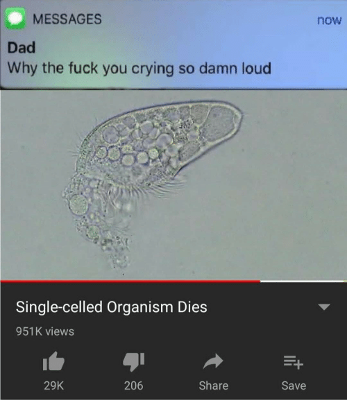 organism: MESSAGES  now  Dad  Why the fuck you crying so damn loud  Single-celled Organism Dies  951K views  Share  206  29K  Save