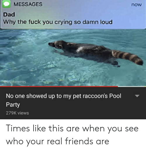 raccoons: MESSAGES  now  Dad  Why the fuck you crying so damn loud  @levin.memes  No one showed up to my pet raccoon's Pool  Party  279K views Times like this are when you see who your real friends are